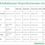 Rispenhortensien beliebtesten Sorten Tabelle